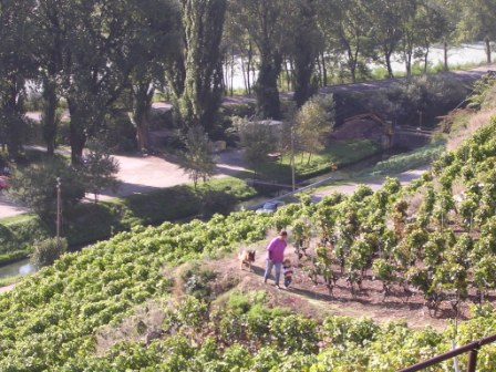 Vignoble en terrasse